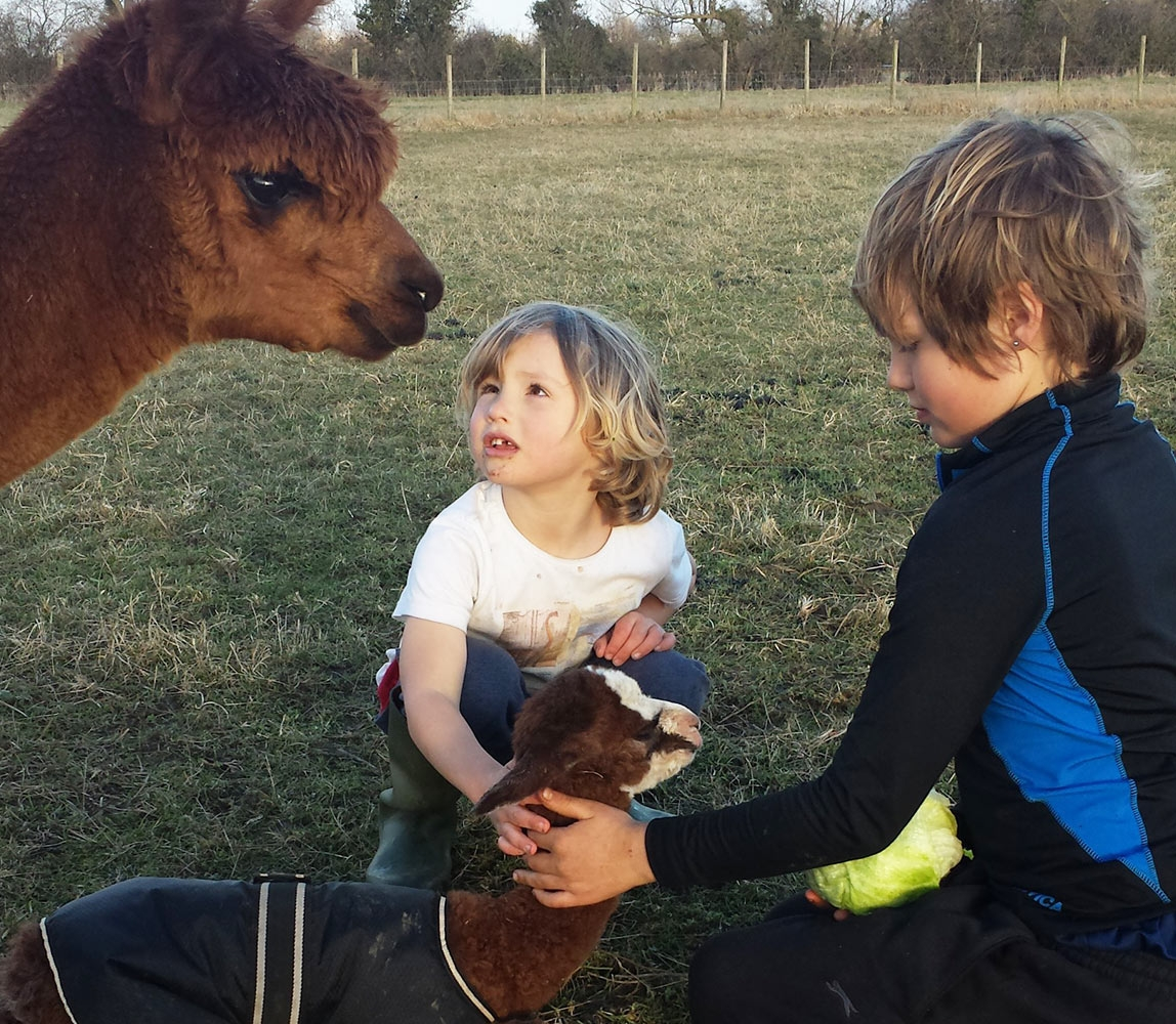 children-with-alpacas_1148x1000_acf_cropped